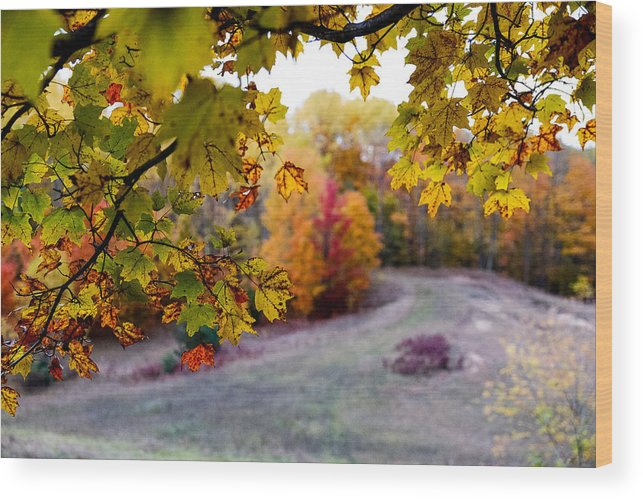 Fuji Wood Print featuring the photograph View From Inside by John McArthur
