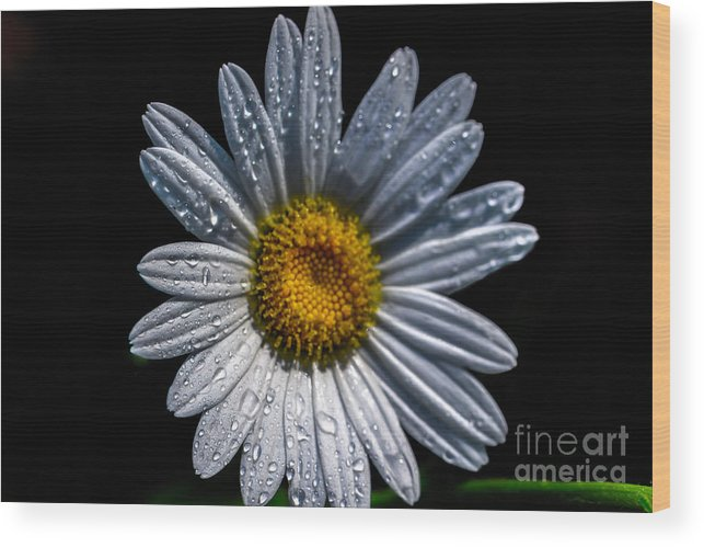 Flower Wood Print featuring the photograph Waking Up by Tracy Michener
