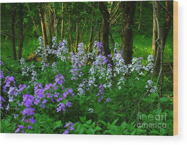 Wildflower Wood Print featuring the photograph Walk In The Woods by Kathleen Struckle