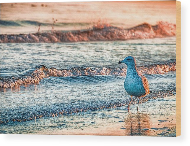 Ocean Wood Print featuring the photograph Walking On Sunshine by Mathias Janke