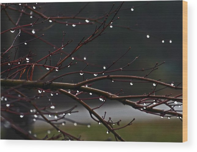 Water Wood Print featuring the photograph Water Droplets by David Campbell
