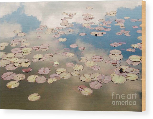 Nature Wood Print featuring the photograph Water Lilies In Schoenbrunn Vienna Austria by Julia Hiebaum