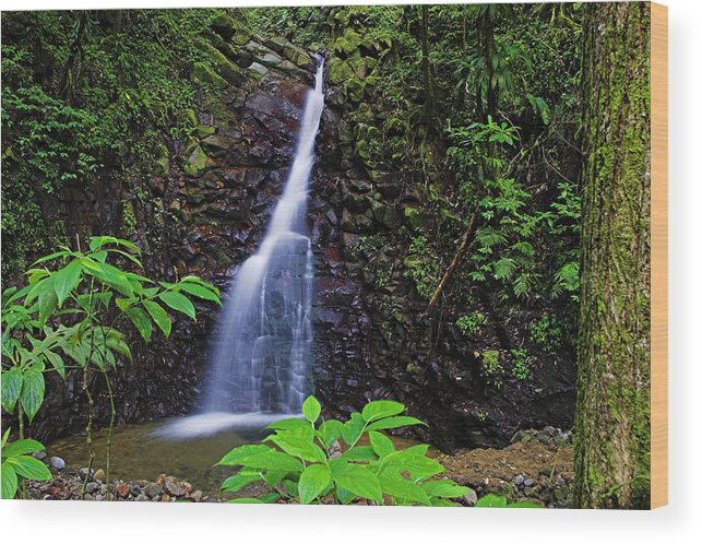 Waterfall Wood Print featuring the photograph Waterfall-1-st Lucia by Chester Williams