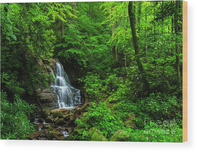 Waterfall and Rhododendron in Bloom by Thomas R Fletcher