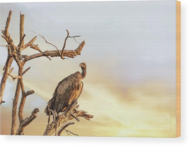 Vulture Wood Print featuring the photograph White-backed Vulture by Jane Rix