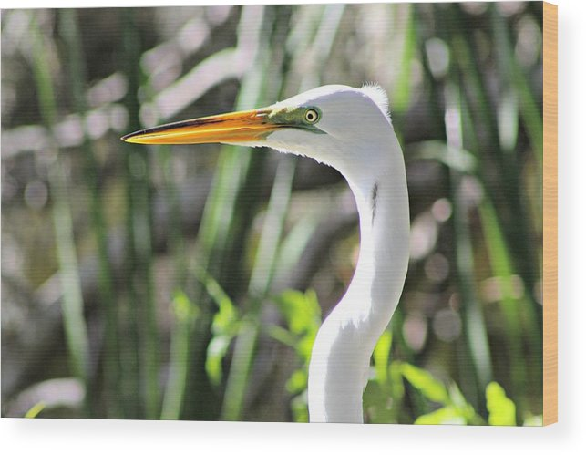 Bird Wood Print featuring the photograph White Egret by Gene Weller