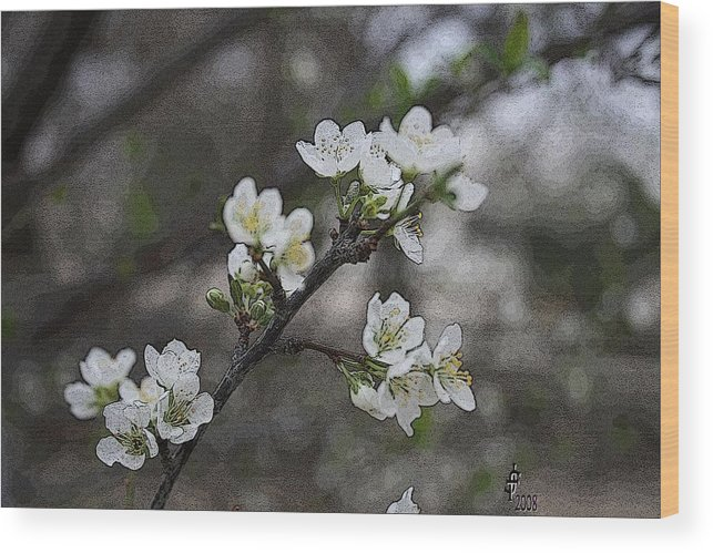 Flowers Wood Print featuring the photograph White Simplicity by Janey Loree
