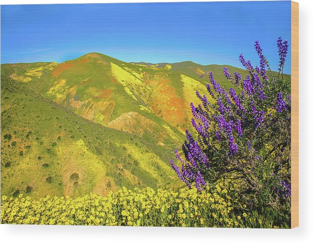 Wildflowers Wood Print featuring the photograph Wildflower Power by Lynn Bauer