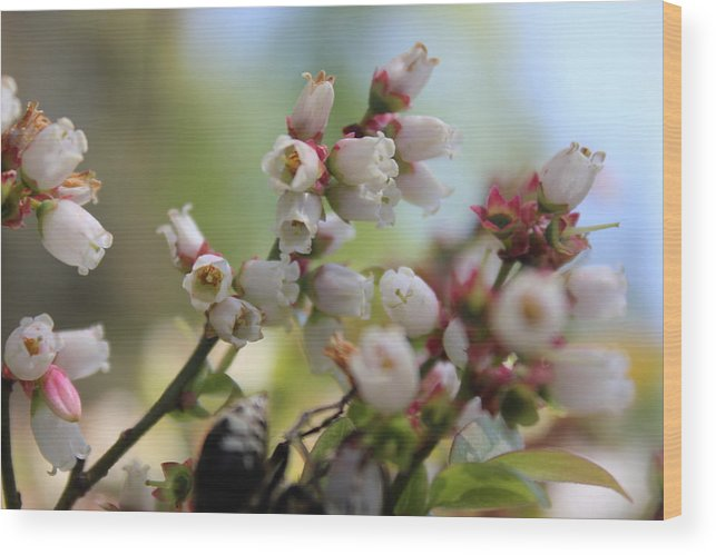 Pure Wood Print featuring the photograph Wildflowers by Two Bridges North