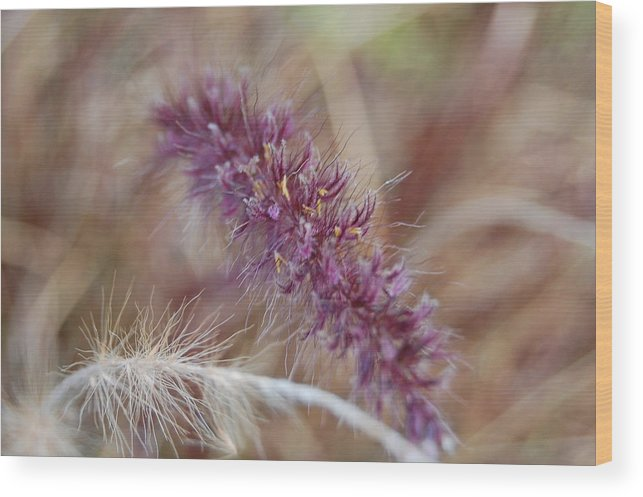 Wild Wood Print featuring the photograph Wildgrass Collage by Jean Booth