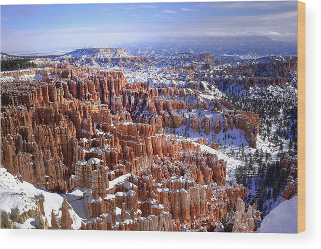 Bryce Canyon Wood Print featuring the photograph Winter Hoodoos by Dan Myers