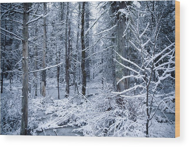 Scenic Wood Print featuring the photograph Winter by Todd Bissonette