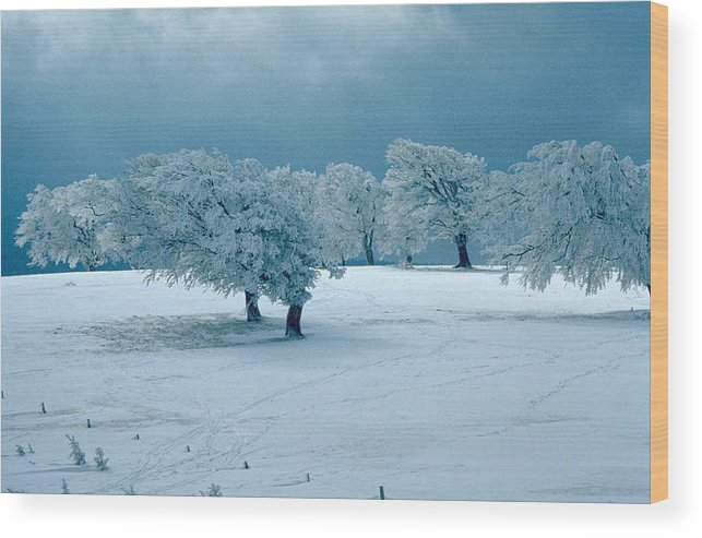 Winter Wood Print featuring the photograph Winter Wonderland by Flavia Westerwelle
