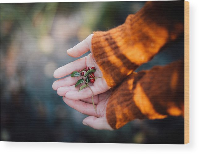 Woman Wood Print featuring the photograph Woman Hands Holding Cranberries by Aldona Pivoriene