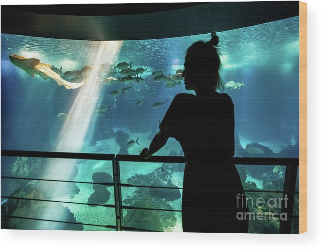 Underwater Wood Print featuring the photograph Woman With Leopard Shark by Benny Marty