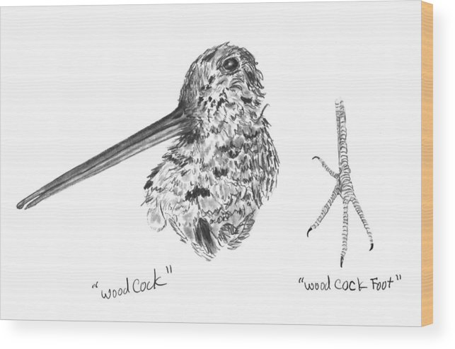 Iowa Wood Print featuring the drawing Woodcock With Foot by Kevin Callahan