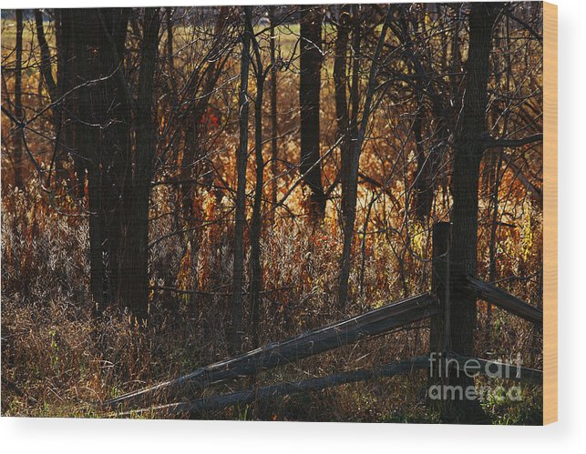 Michigan Wood Print featuring the photograph Woods - 1 by Linda Shafer