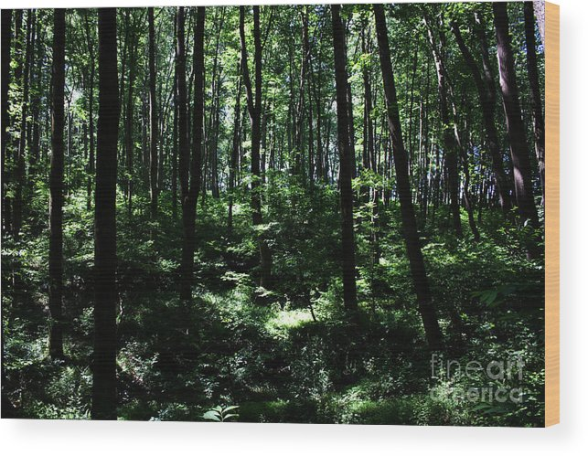 Nature Wood Print featuring the photograph Woods by Robin Lynne Schwind
