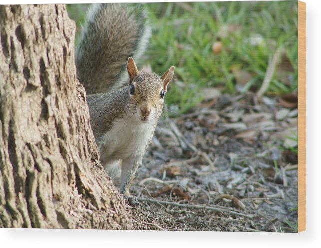 Squirrel Wood Print featuring the photograph You Still Following Me by Lynda Dawson-Youngclaus