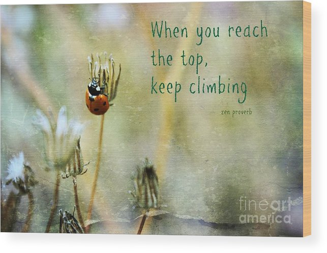 Lady Bug Wood Print featuring the photograph Zen Proverb by Clare Bevan