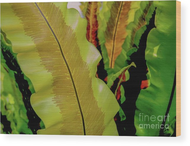 Plants Wood Print featuring the photograph Plants And Leaves Hawaii by D Davila