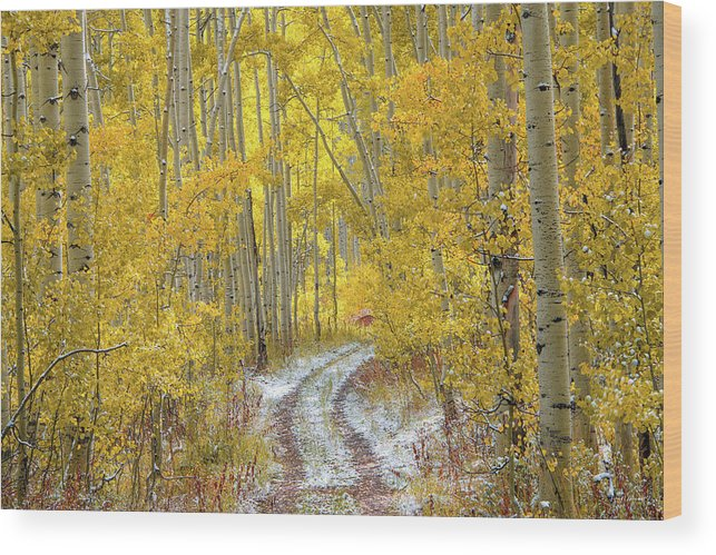 Aspen Forest Wood Print featuring the photograph An Autumn Path by Leland D Howard