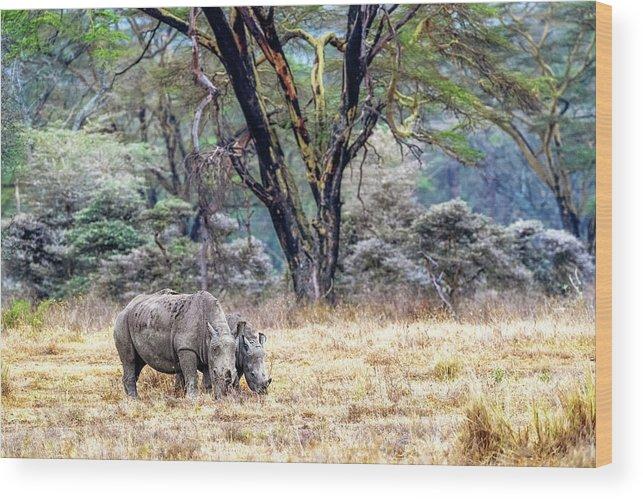 Rhinocerotidae Wood Print featuring the photograph Baby And Parent White Rhino In Lake Nakuru by Susan Schmitz