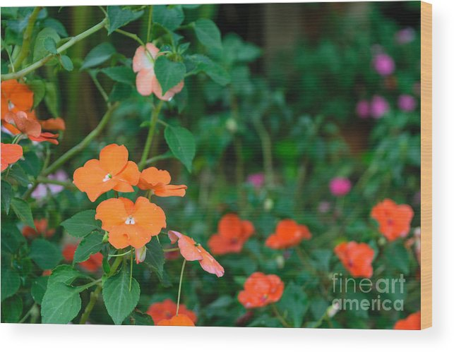 Beauty Wood Print featuring the photograph Beautiful Orange Flower, Naturally by Pongmoji