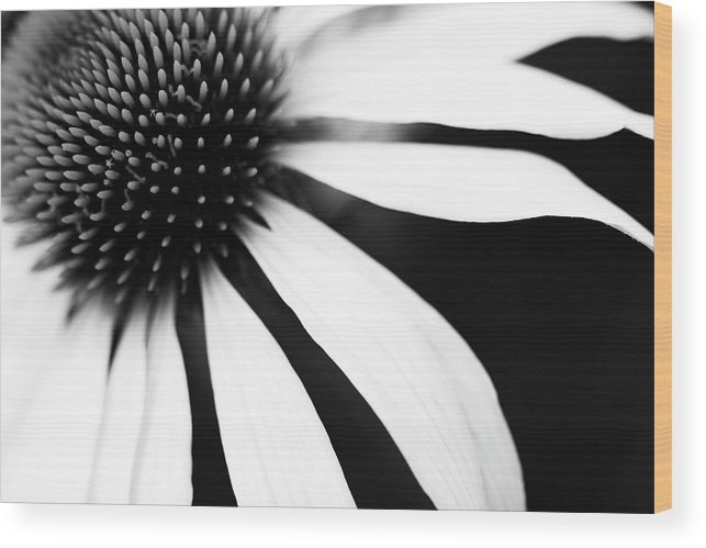 Sweden Wood Print featuring the photograph Black And White Flower Maco by Johan Klovsjö