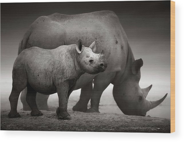 Wild Wood Print featuring the photograph Black Rhinoceros Baby And Cow by Johan Swanepoel