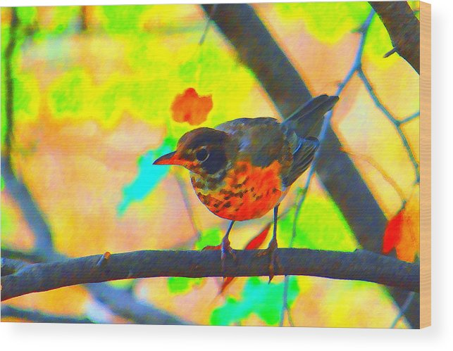 Brushed Robin Wood Print featuring the photograph Brushed Robin by Edward Swearingen