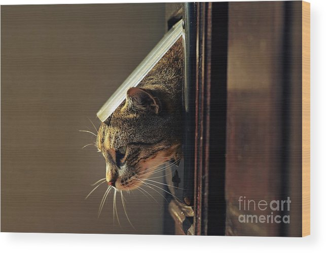 Play Wood Print featuring the photograph Cat Crawls Out Of The House Through A by Davidtb