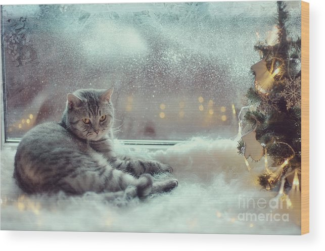 Pets Wood Print featuring the photograph Cat In The Winter Window by Alekuwka