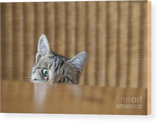 Fur Wood Print featuring the photograph Curious Young Kitten Looking Over A by Dirk Ott
