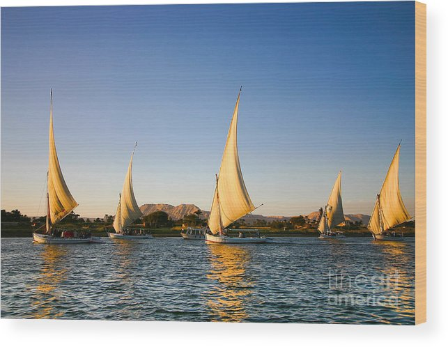 Sailboat Wood Print featuring the photograph Felucca On The Nile River by Jeffrey Liao