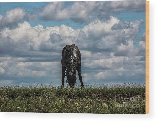 Horse; Horses; Montana; Animals; Clouds; Pasture; Grass; Nature Wood Print featuring the photograph Lone Black by Kathy McClure