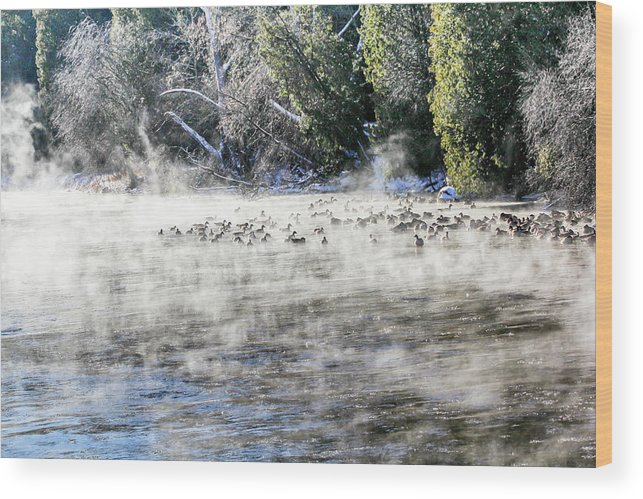 Speed River Wood Print featuring the photograph Misty River by Nick Mares
