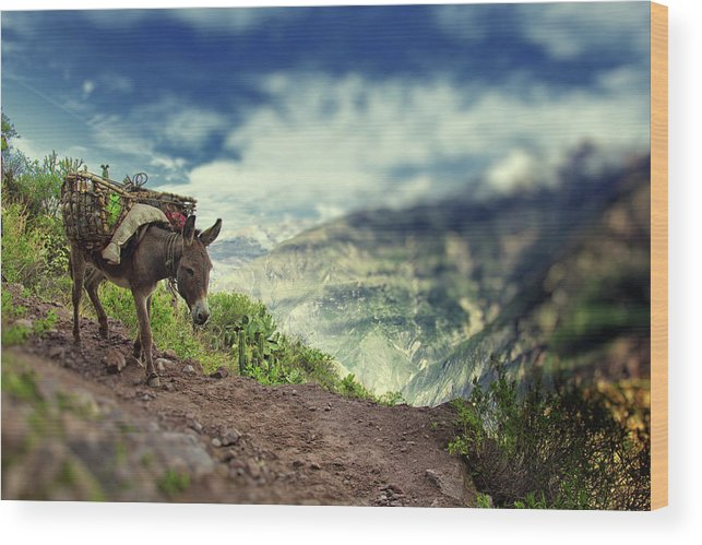 Working Animal Wood Print featuring the photograph Mountain Donkey by By Kim Schandorff