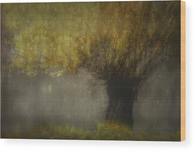 Willow Wood Print featuring the photograph Pollard Willow by Nel Talen