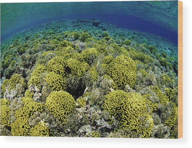 Underwater Wood Print featuring the photograph Reef Garden by Tammy616