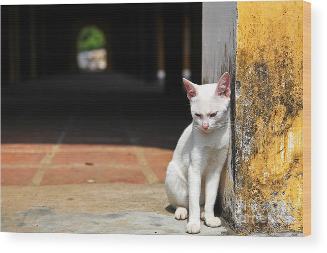Small Wood Print featuring the photograph White Cat Resting Outside by Stephen Chung