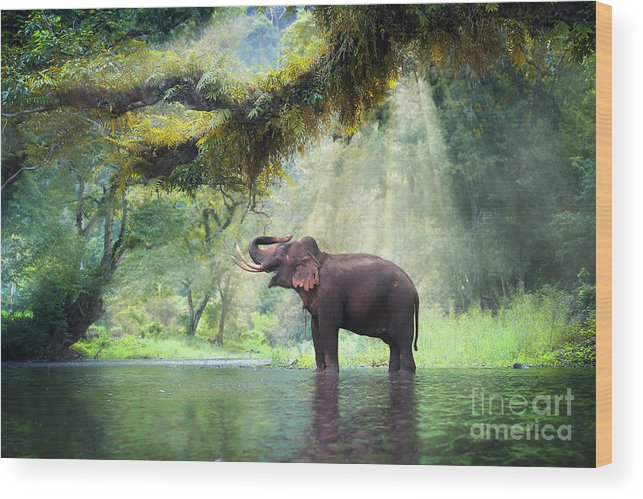 Beam Wood Print featuring the photograph Wild Elephant In The Beautiful Forest by Bundit Jonwises