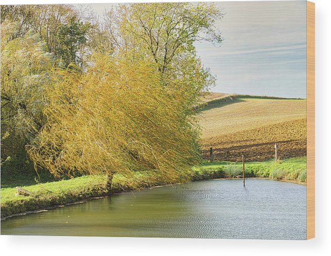 Wind Wood Print featuring the photograph Wind In The Willow by Michael Briley