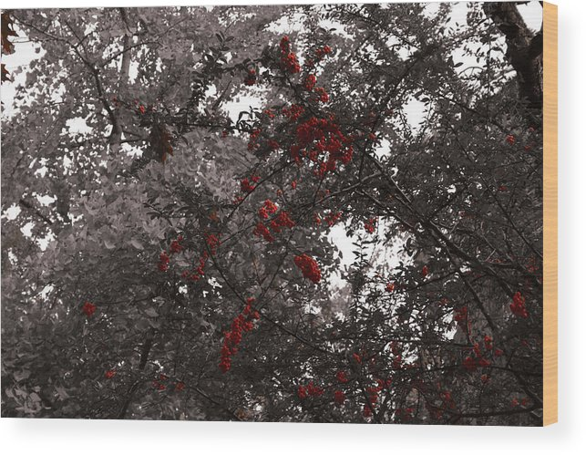 Nature Wood Print featuring the photograph Berry Trees by Bill Ades
