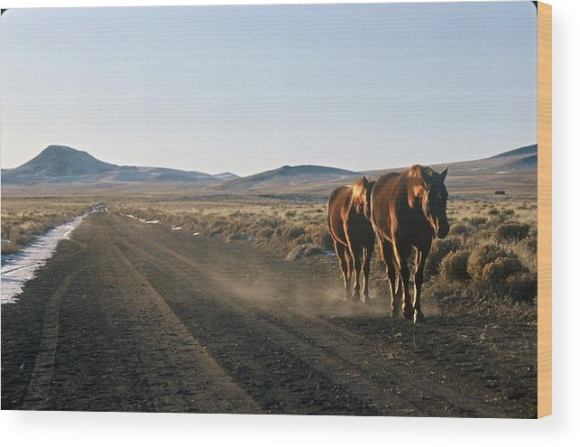 Horses Wood Print featuring the photograph Horses Cruising by Lynard Stroud