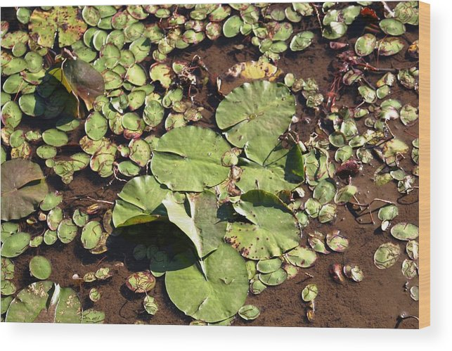 Nature Wood Print featuring the photograph Lilly Pads by Lisa Johnston