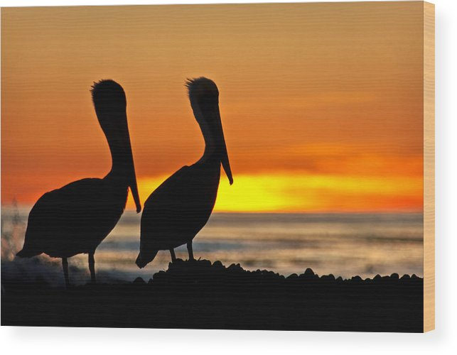 Santa Barbara Wood Print featuring the photograph Pelicans by Elijah Weber