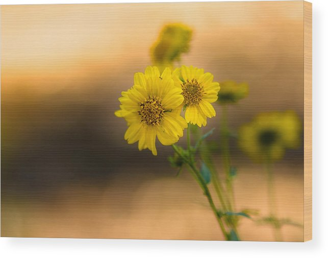 Flowers Wood Print featuring the photograph Yellow Flower by Hugh Mobley