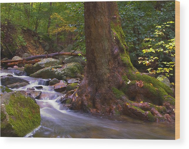 River Wood Print featuring the photograph As The River Runs by Karol Livote
