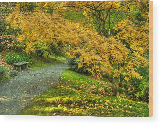 Japanese Gardenjapanese Mapleautumnfall Colors Wood Print featuring the photograph Autumn In The Garden by Jeff Cook